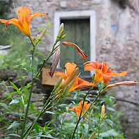 LONGARONE, ITALY - SEPTEMBER 28: Flowers are seen in front of one of the many ababndoned houses in the village of Casso on September 28, 2013 in Longarone, Italy. The Vajont Dam tragedy happened on the night of the October 9, 1963, when a landslide broke away from Monte Toc and fell into the Vajont River, causing a wave that struck the neighboring towns and killing more than 2000 people.  (Photo by Marco Secchi/Getty Images)