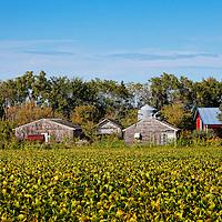 Rural Minnesota farm.