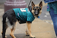 Philadelphia Eagles fans walk their dog Hank on South Broad Street Sunday, February 04, 2018 in Philadelphia, Pennsylvania.  WILLIAM THOMAS CAIN / For The Inquirer