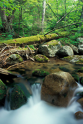 Sandwich, NH..Wonalancet Brook and an old-growth hardwood forest in The Bowl Natural Area.  Part of the Sandwich Wilderness Area in the White Mountain N.F.
