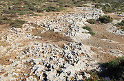 Rocky limestone bare surface showing effects of chemical weathering, Marfa peninsula, Malta
