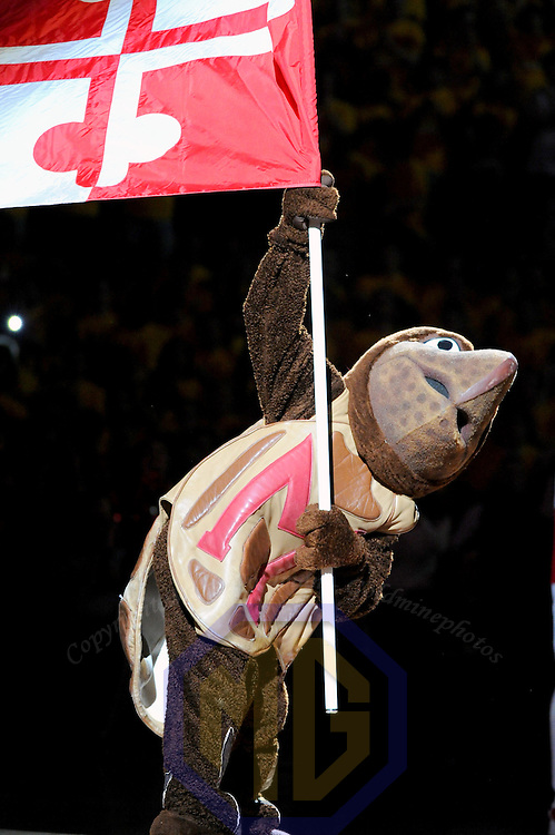 16 February 2013:   The Maryland Terrapins mascot waves the state flag prior to the game against the Duke Blue Devils at the Comcast Center in College Park, MD. where the Maryland Terrapins upset the second ranked Duke Blue Devils, 83-81.