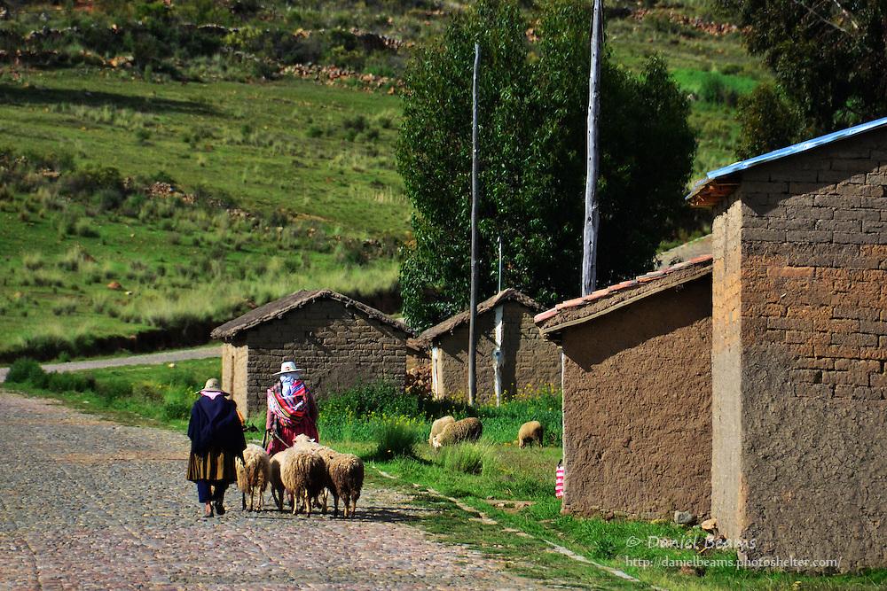 Quechua women with sheep near Vacas, Cochabamba, Bolivia