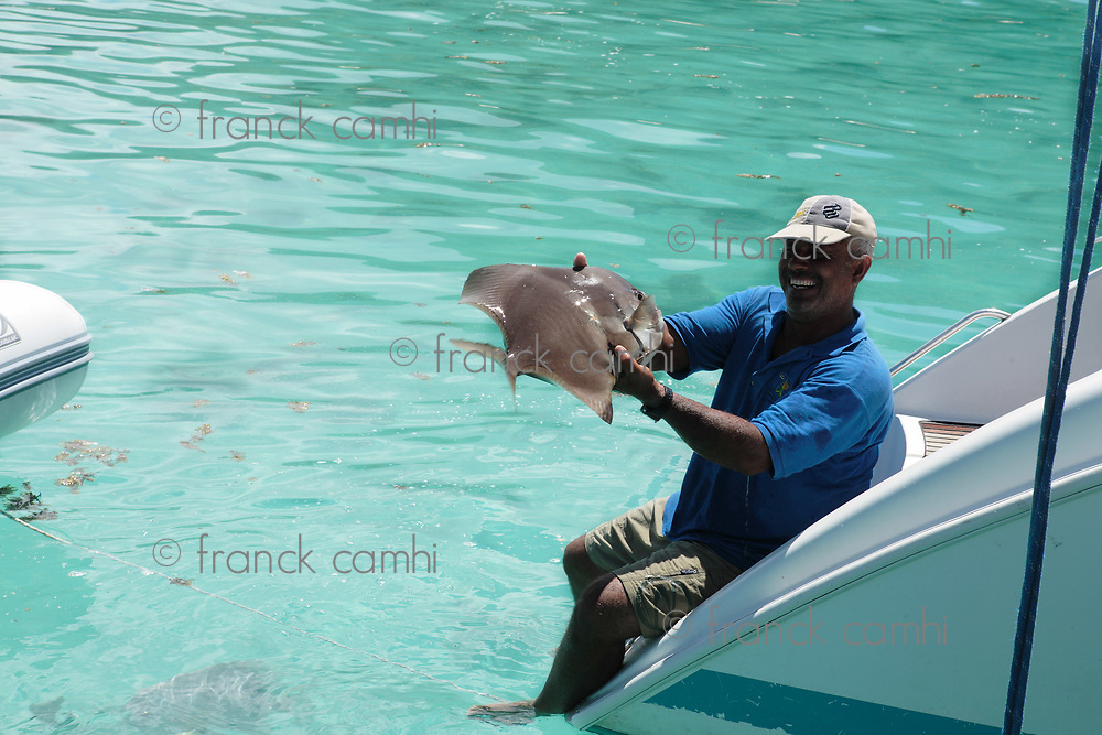 sailing skypper holding a batfish platax of the beautiful crystal water of seychelles island