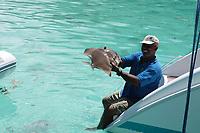 sailing skypper holding a batfish platax of the beautiful crystal water of seychelles island