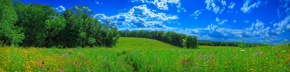 Panoramic view of midwestern prairie's gently rolling hills, with central pathway leading through profuse bloom of native wildflowers.  Composite of seven images.
