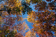 .2012 Fall colors in Waushara County, Wisconsin.