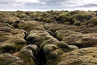 Moss on Eldhraun Lava west of Kirkjubaejarklaustur, Iceland. Mosavaxið Eldhraun vestan við Kirkjubæjarklaustur.