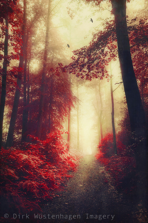 Path through a red tinted forest - digitally manipulated photograph