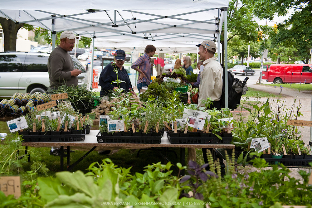 Organic farmers Ben and jessie Sosnicki under their tent at the Dufferin Grove Organic Farmers' Market in Toronto, Canada. Plants in the foreground are from Urban Harvest.
