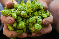 Andy Pax of Heartland Hops in Fort Recovery, Ohio. (Jodi Miller)