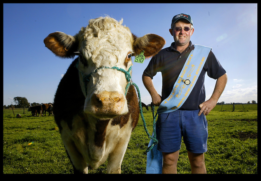 Royal Melbourne Show - Blue Ribbon Winners of 2003  David Bolton with Paige Carmina S10, a cow which won Supreme Exhibit in the Poll Hereford Feature Show.  Pic By Craig Sillitoe  FOR THE SUNDAY AGE SPECIAL 000 melbourne photographers, commercial photographers, industrial photographers, corporate photographer, architectural photographers, This photograph can be used for non commercial uses with attribution. Credit: Craig Sillitoe Photography / http://www.csillitoe.com<br />