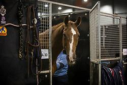 Van der Meer Patrick, NED, ZIppo<br /> Indoor Brabant<br /> © Sharon Vandeput<br /> 9/03/18