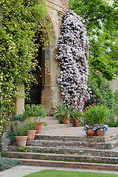 The steps and arch at the base of The Tower at Sissinghurst Castle Garden. Clematis montana 'Elizabeth' growing on the wall.