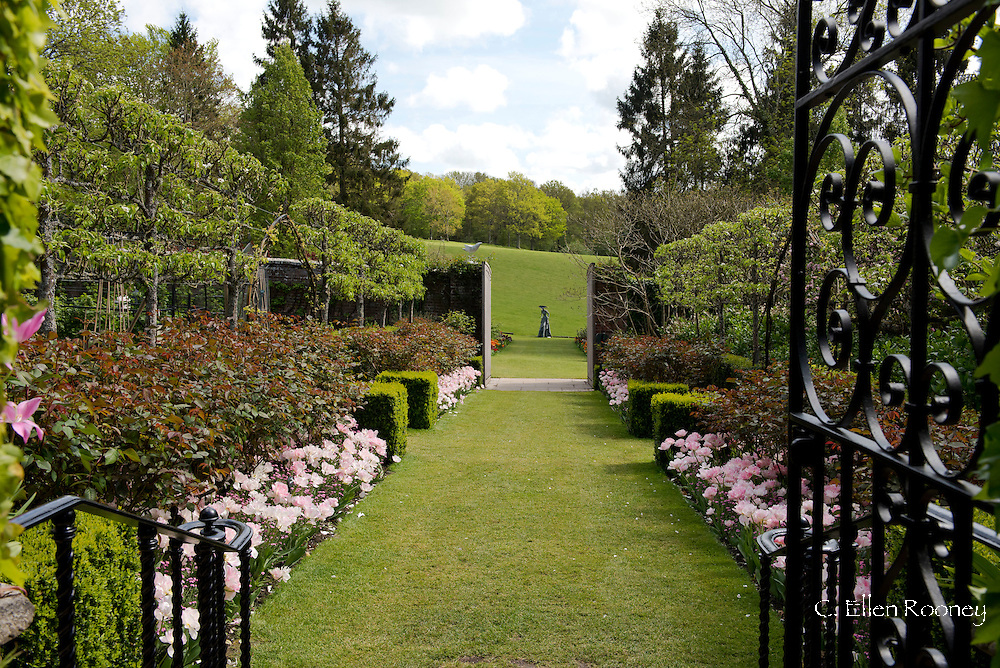 Decorative iron gates leading to double borders planted with Tulip 'Angelique', a pale pink tulip at Pashley Manor Gardens, Ticehurst, East Sussex, UK