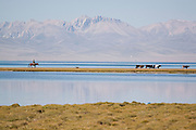 A horseman herds cattle by the lagoon on the east shore of lake Song Köl, Kyrgyzstan