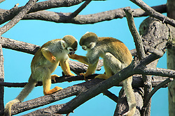 November 10, 2018 - Weihai, Weihai, China - Weihai,CHINA-Monkeys can be seen at Shendiao Hill Zoo in Weihai, east China's Shandong Province. (Credit Image: © SIPA Asia via ZUMA Wire)