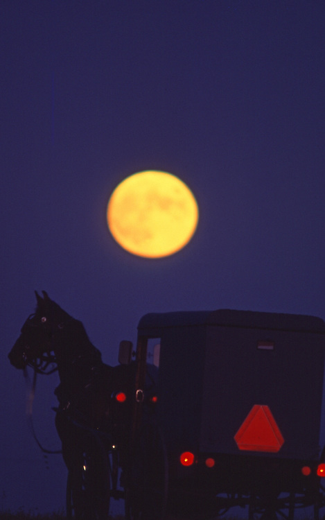 Amish buggy on road at full moon, Lancaster County, PA