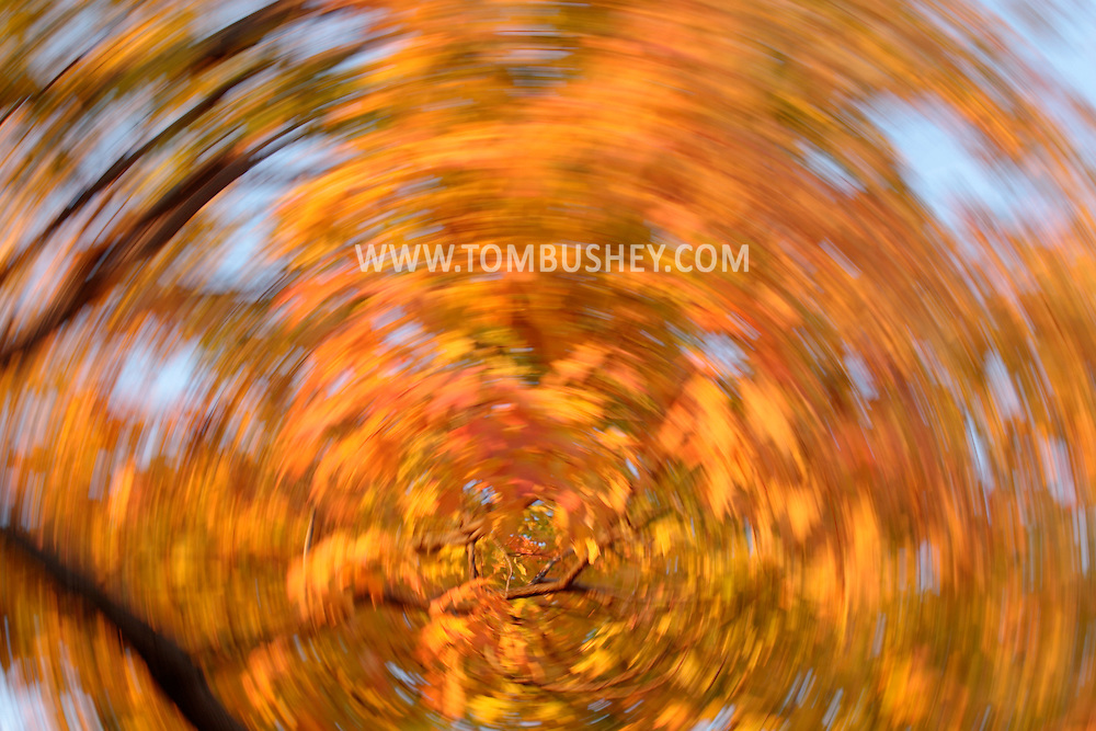 Yellow and orange maple leaves a blurred by camera movement during a long exposure on Oct. 31, 2007.