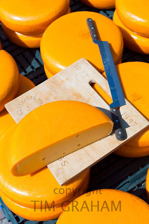 Cutting knife with wheels / rounds of Gouda cheese at Alkmaar cheese market, The Netherlands