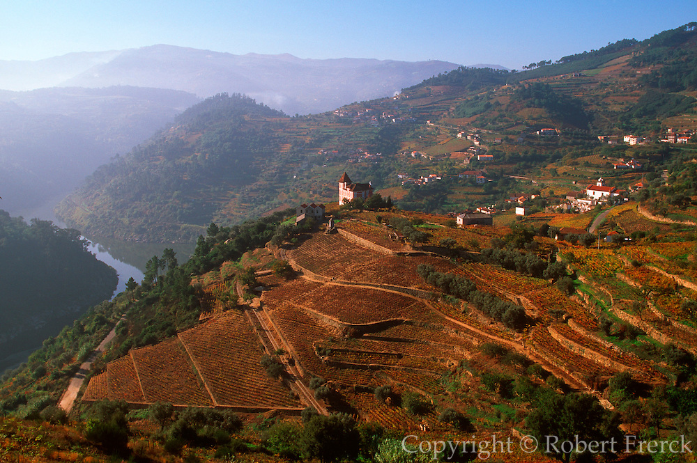 PORTUGAL, AGRICULTURE vineyards on Douro River at Barqueiros