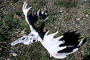 The sun-bleached skull and antlers of a moose rest along the banks of the Sanctuary River in Denali National Park, Alaska.