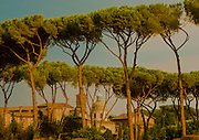 A view from Palatine Hill, Rome, Italy