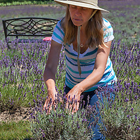 Sabena explains how she grows great lavender.