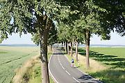 Landstrasse, Allee, Radfahrer, Radler, Landschaft Naturpark Solling-Vogler, Weserbergland, Niedersachsen, Deutschland.| .cyclist, country road, alley, landscape Weserbergland, Lower Saxony, Germany.