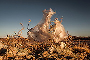 08/11/2014 - Uyuni, Bolivia:Plastic tree #1. Plastic bags are part of the landscape of the Bolivian Altiplano. The accumulation of plastic bags on the environment cause deterioration of the landscapes and agriculture soils and it is associated to the death of domestic and wild animals.