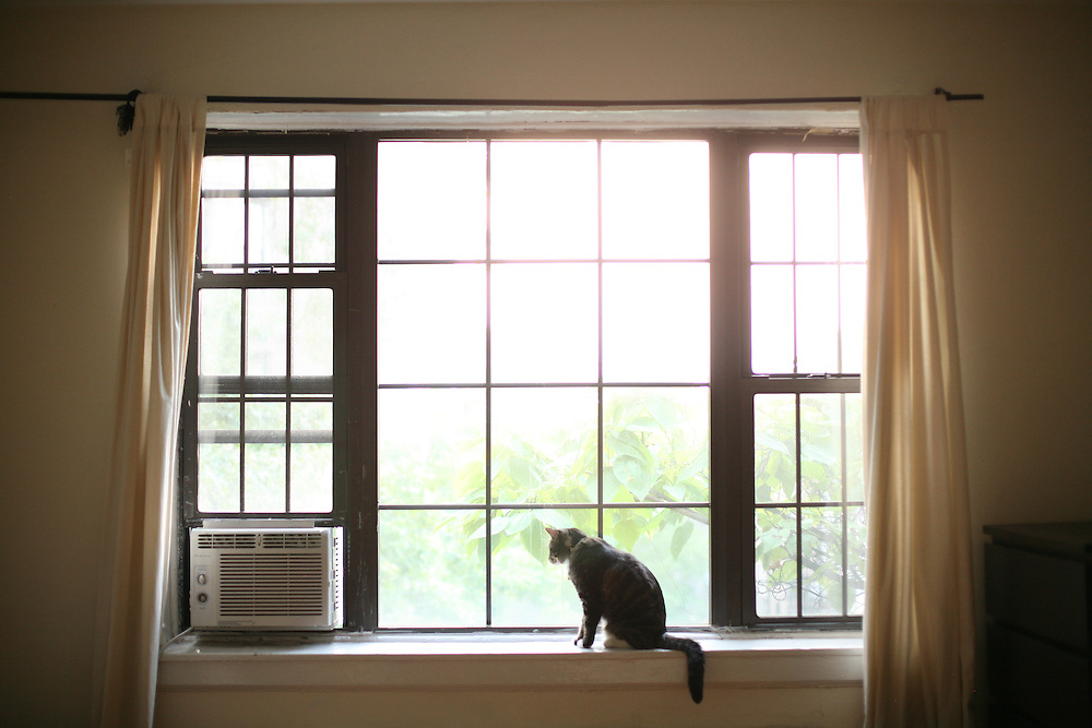 Pearl looking out the window in Brooklyn, New York. 2010