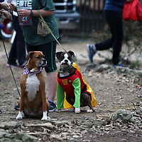 There weren't just superheroes at the CASA Superhero run Saturday in Oxford, there were superdogs like Ox
