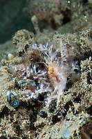 This decorator crab has covered itself with small stinging anemones.