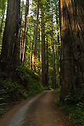 Prairie Creek Redwoods State Park, dirt road, California