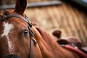 The Horse - Portfolio 4