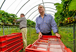 Pictured: Chair of the Scottish Affairs Committee Pete Wishart, SNP MP for Perth and David Duguid, Conservative MP for Banff and Buchan, visited the fruit farm and picked strawberries.<br /> <br /> Members of the Scottish Affairs Select Committee of Parliament visited West Jordan Stone fruit farm in rural Perthshire to see first hand the effects of reduced numbers of foreign workers coming in to pick fruit and other seasonal jobs, meaning tons of fruit has been left to rot on the plants.<br /> <br /> &copy; Dave Johnston/ EEm