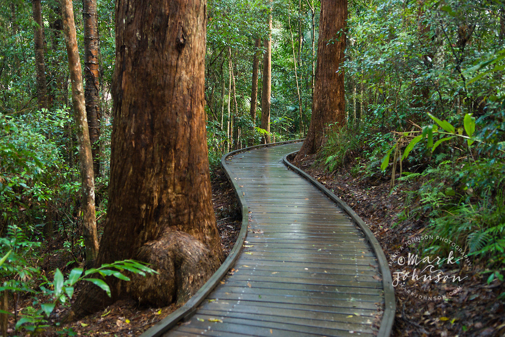 Forest walkway, Kondalilla National Park, Queensland, Australia