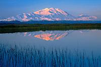 Denali and Alaska Range reflected in kettle pond at sunrise in Denali National Park Alaska