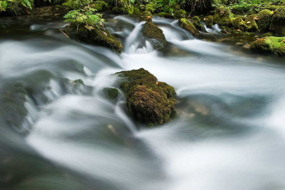 Moss-covered stones in the Crna Rjieka, Black river springs, Plitvice National Park, Croatia