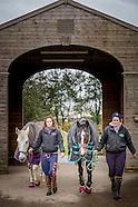 E an S Equestrian