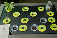 AeroGarden Farm 04 Right Tray at 14 days. R01-R03 Basil; R04 Genovese Basil; R05 Chives; R06 Dill; R07 Dill; R08-R09 Parsley; R10 Oregno; R11 Rosemary; R12 Thyme. Image taken with a Leica TL-2 camera and 35 mm f/1.4 lens (ISO 640, 35 mm, f/11, 1/40 sec).