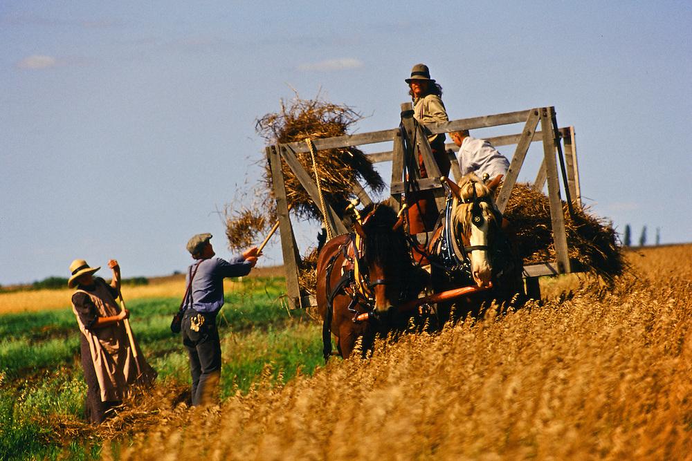 Early 20th Century historic harvest, Motherwell Farm, Saskatchewan