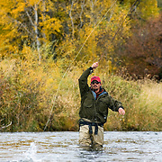 Setting the hook on a trout during a fall day on the lower Henry's Fork of the Snake River, Idaho.