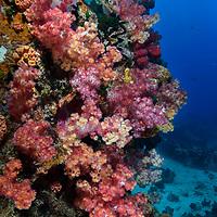 Seychelles_premium