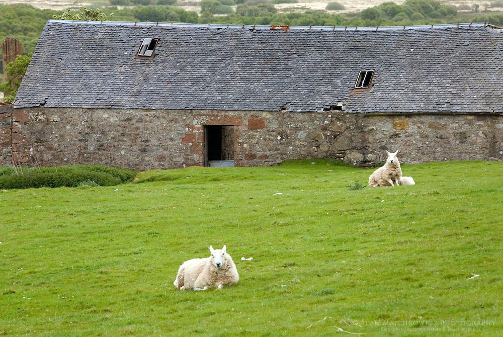 Ruins of Moss Farm