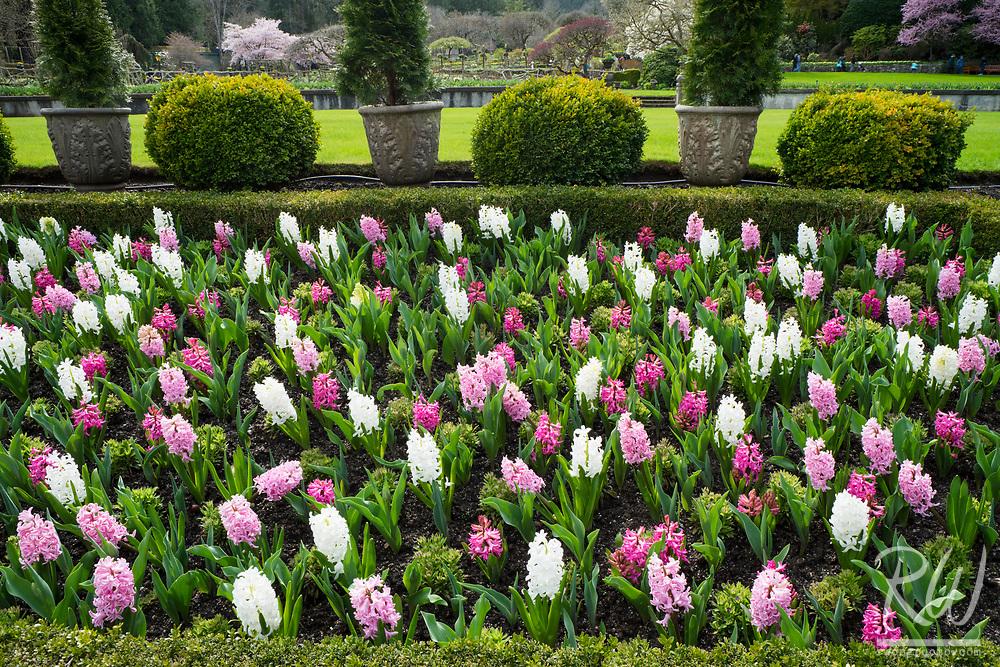 The Butchart Gardens Italian Garden in Spring, Vancouver Island, B.C., Canada