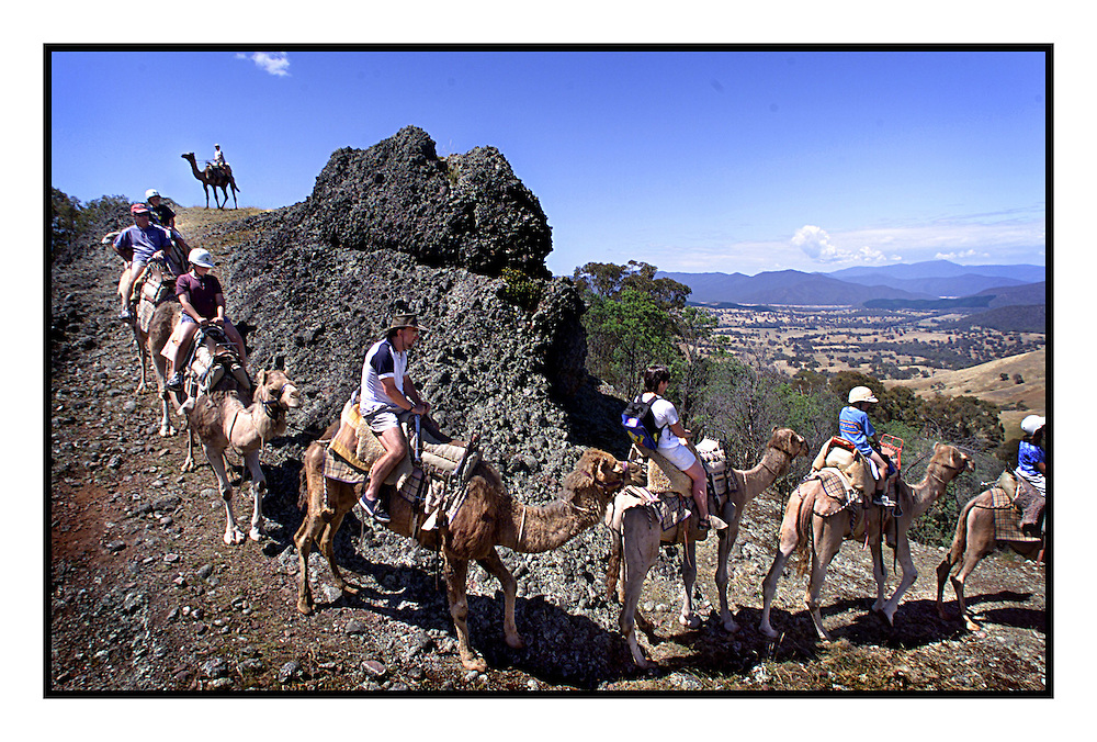 SPECIAL 00004601 csz000109.001.001.jpg..Digicam 00004601  Victoria in the holiday season..Holiday makers near Mansfield experience camel rides in the high country  Picture by CRAIG SILLITOE melbourne photographers, commercial photographers, industrial photographers, corporate photographer, architectural photographers, This photograph can be used for non commercial uses with attribution. Credit: Craig Sillitoe Photography / http://www.csillitoe.com<br />