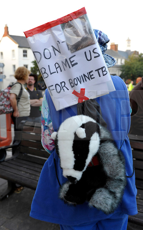 &copy; Licensed to London News Pictures. 26/08/2013. Minehead, Somerset, UK. People protesting against the planned badger cull gather hold a candlelit vigil and march in the town of Minehead in West Somerset which is one of the areas where badgers will be shot by marksmen in a pilot trial with the eventual aim of reducing bovine turberculosis in cattle.  28 August 2013.<br /> Photo credit : Simon Chapman/LNP