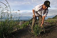 A farmer planting grass on the slopes of Gunung Merapi to stabilise the soil, Kinahrejo, Java, Indonesia.