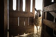 Stone Leigh Knoll Sheep Farm